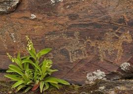 Petroglifos. Domingo García