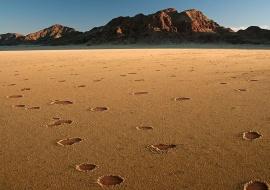 Círculos de hongos. Namibia