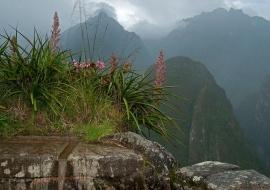 Fuente inca. Machu Picchu
