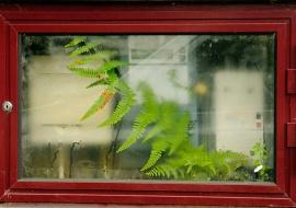 Indoor fern. Sete Cidades. Sao Miguel Island