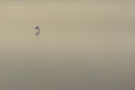 Niebla en el P. N. de Ses Salines.