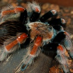 Macro fotografía araña