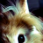 Fotografía conejo