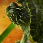 Fotografía tortuga